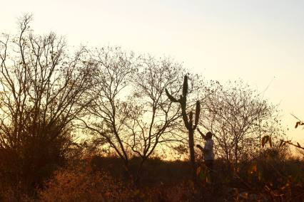South American PhoNographic Mornings_#02_RAMOS_Cactus soundscape_Sunday 29th April 2018 20180429©Rodrigo Ramos copie
