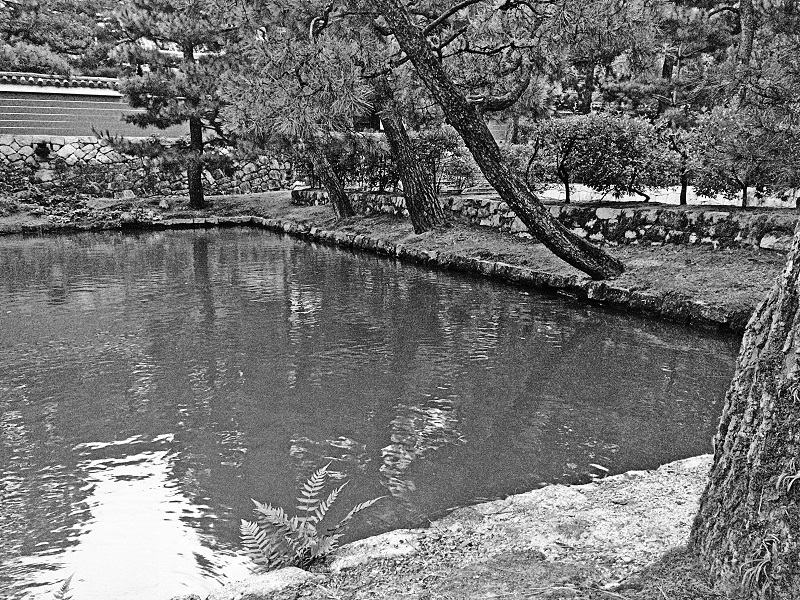 East Asia PhoNographic Mornings_#09_Takamitsu Ohta_a pond with carp in the temple_compr